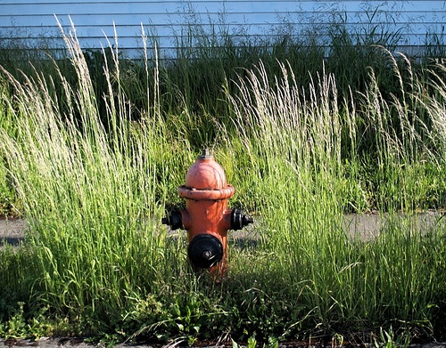 fire hydrant in weeds
